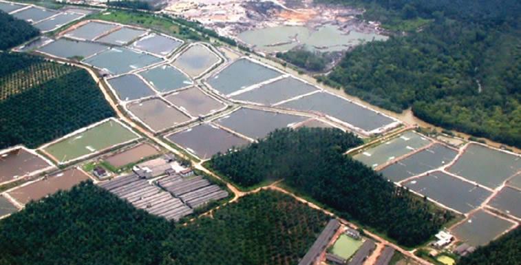 World Pumps: Shrimp Farming - a High Water Demand Business